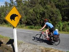 Kiwi přes cestu!